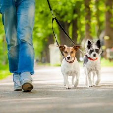 Dog Walker | Pet Sitting