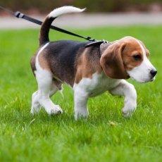Les Services Dogwalking
