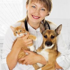 Surbiton Cat/Pet Sitter Available - Cat Sitting/ Dog Walking