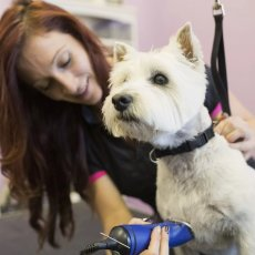 Bespoke Dog Walking, Cat Sitting, Pet Care, Pet Grooming