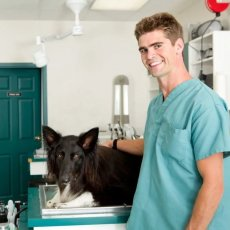 Welcome to London Veterinary Surgeries