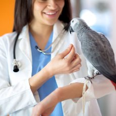 Animal Hospital - Exotics and small mammals