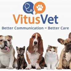Veterinar Belfast