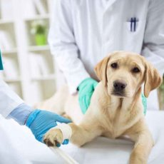 Vaccinations and Microchipping in London