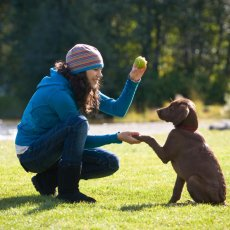 Dog walking & doggy daycare services
