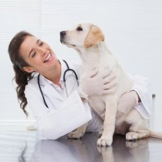 Expert Animal Health Care in Leeds