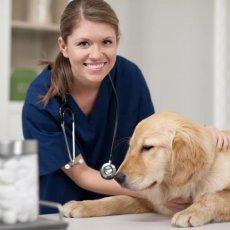 Veterinary Nursing Care