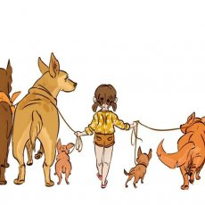 Dog walking and Doggy Daycare