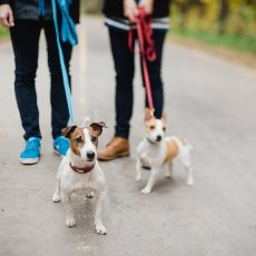 Dog Walking Liverpool / Pet Sitting Liverpool