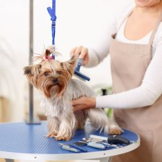 Dog Grooming - Dog Walking - Pet Care – Cat Sitting