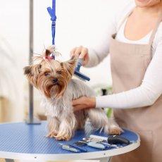 Dog Grooming - Dog Walking - Pet Care – Cat Sitting