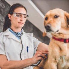 Your veterinarian