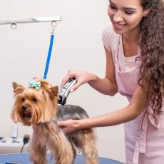 Grooming & Care in London