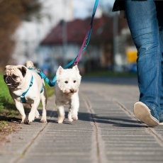 Dog Walking / Walker Pet Services