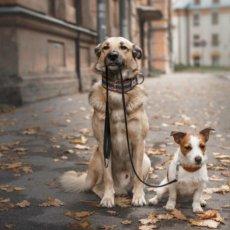 Dog Walking near Baker Street
