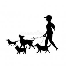 DOG WALKER/SITTER IN EAST LONDON