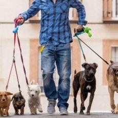 Dog walking in Greenwich and Blackheath
