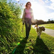 Dog walking | day care | cat sitting