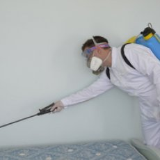 Ask for Your Free Pest Control Quotes in Crewe