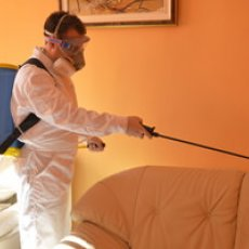 Ask for Your Free Pest Control Quotes in Warrington