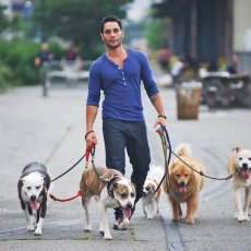 Dogs Walking in London