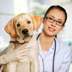 Pet Care in Glasgow