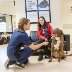 Vets4Pets vets in Glasgow Forge